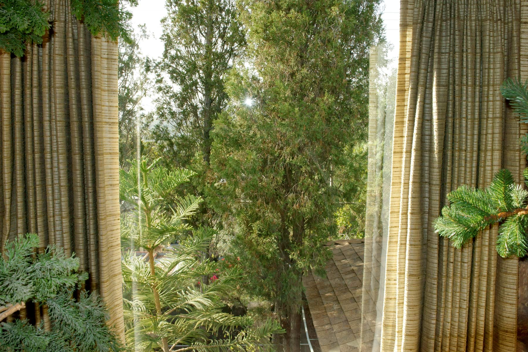 curtainandtrees